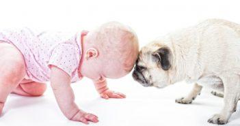 rencontre-enfant-chien